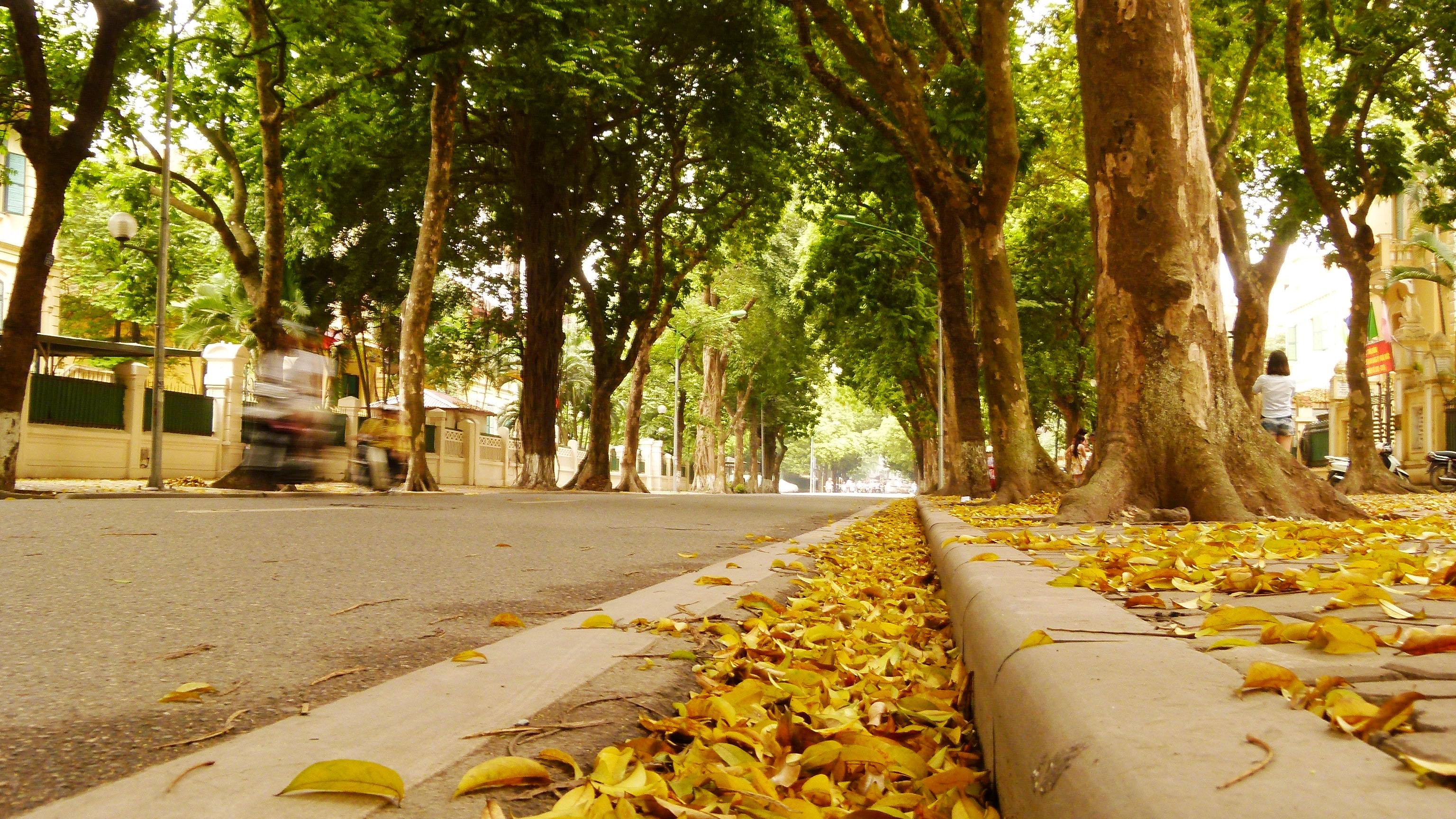 Mùa thu vàng Hà Nội