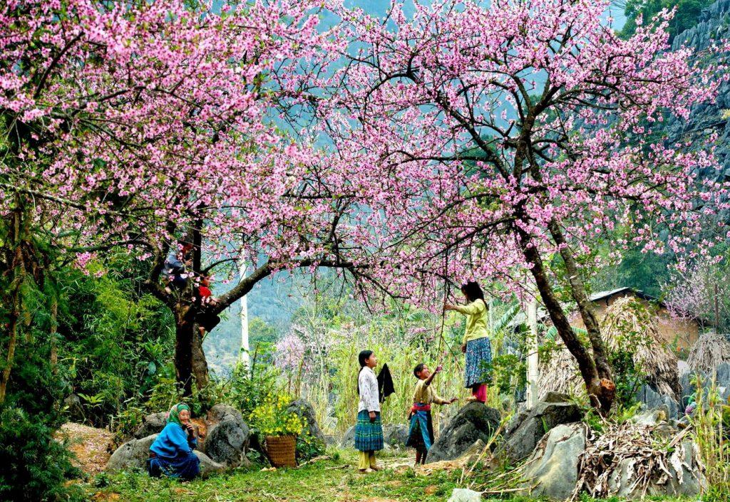 Du lịch Mộc Châu bốn mùa hoa