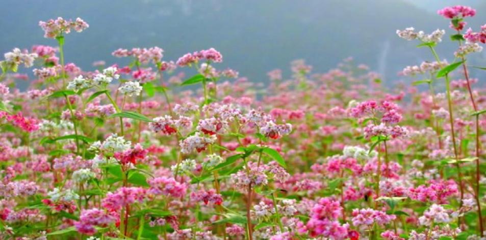 3 loài hoa phương Bắc bạn phải ngắm trong mùa đông