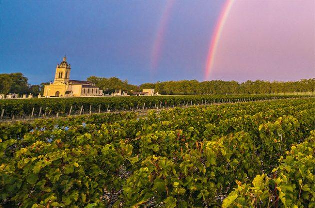 Dạo quanh vùng trồng nho – du lịch Bordeaux trọn vẹn nhất!