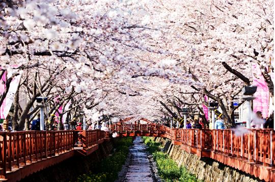Du lịch Hàn Quốc 5 ngày không cần Visa