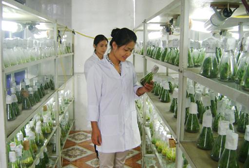 Việc làm kỹ sư nông nghiệp - cơ hội cho các bạn trẻ say mê nghề nông
